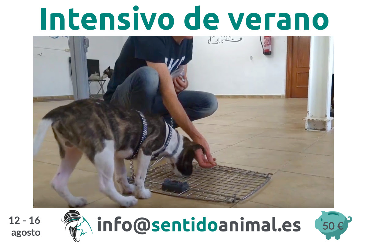Curso intensivo de educación canina