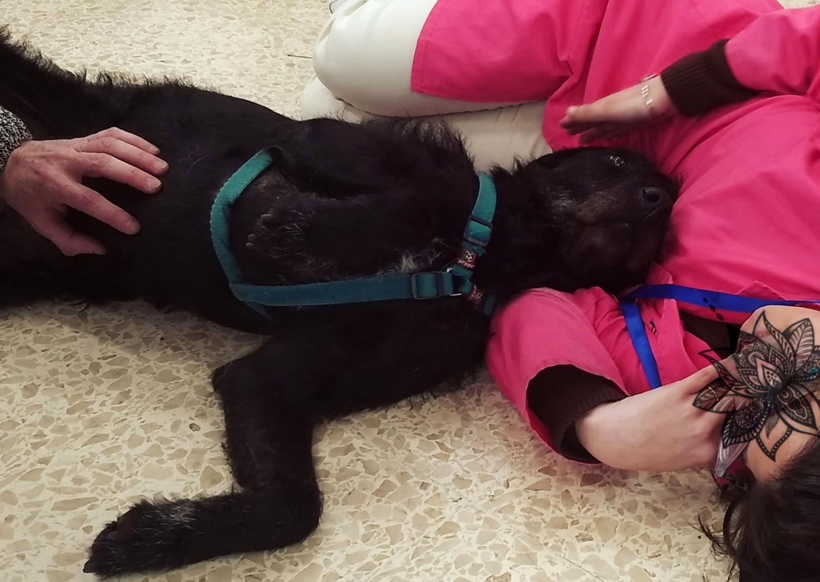 Sasha en sesión de Intervenciones Asistidas con Animales