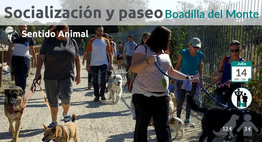 Salida de socialización canina Boadilla del Monte