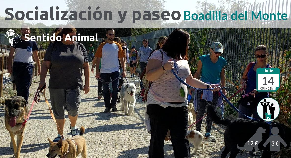 Socialización canina y paseo – julio 2019