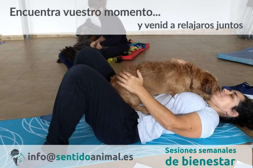 Sesiones de bienestar animal