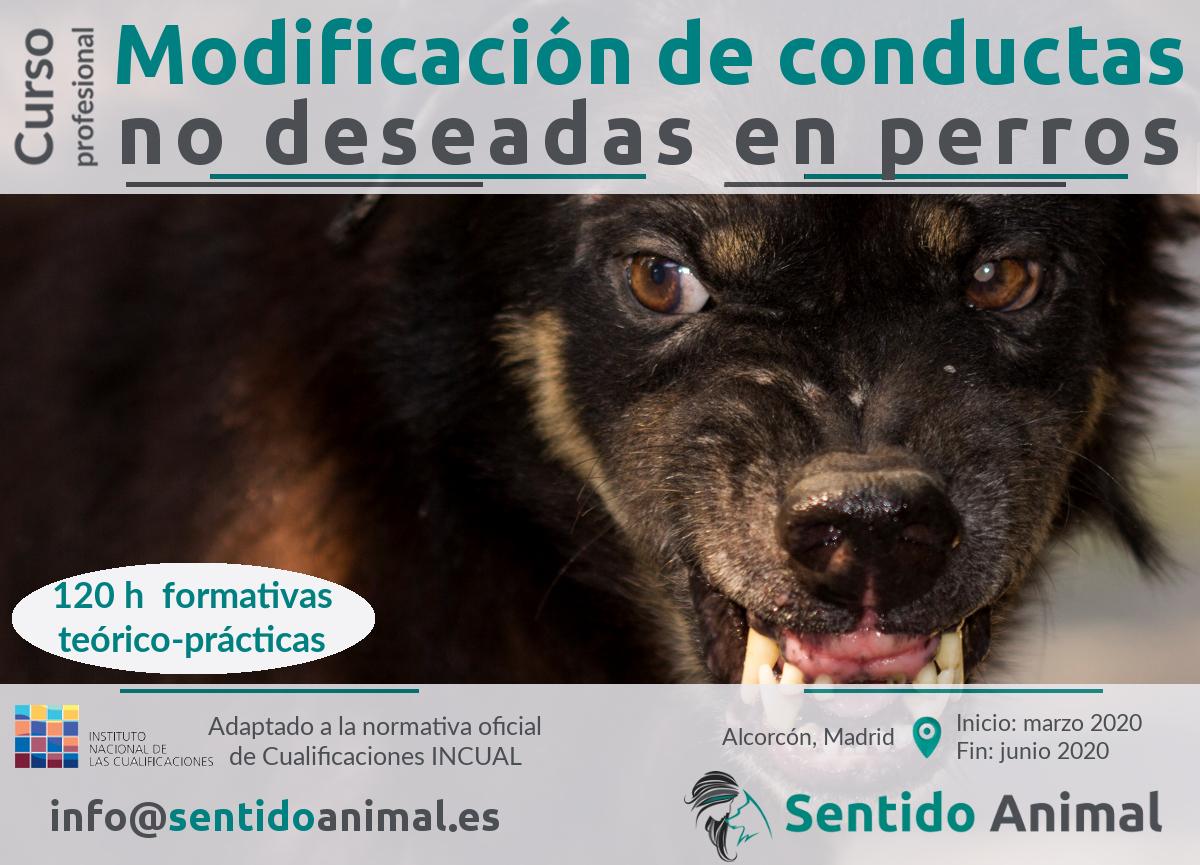 Curso profesional de modificación de conducta no deseada a perros