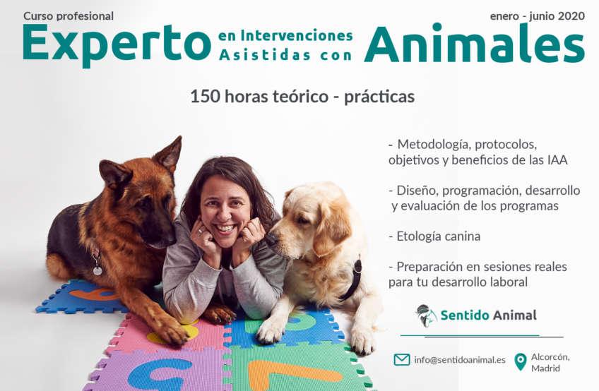 Experto en Intervenciones Asistidas con Animales