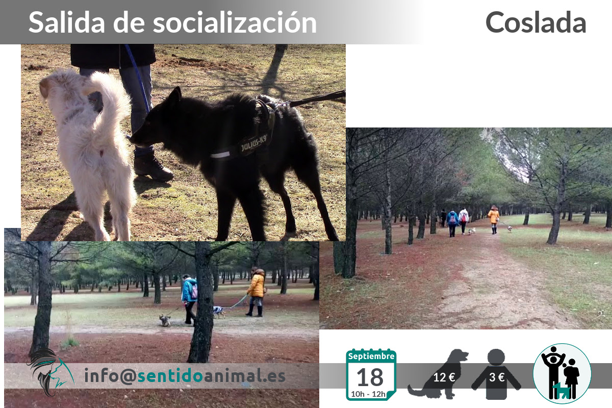 Salida de socialización canina - Coslada