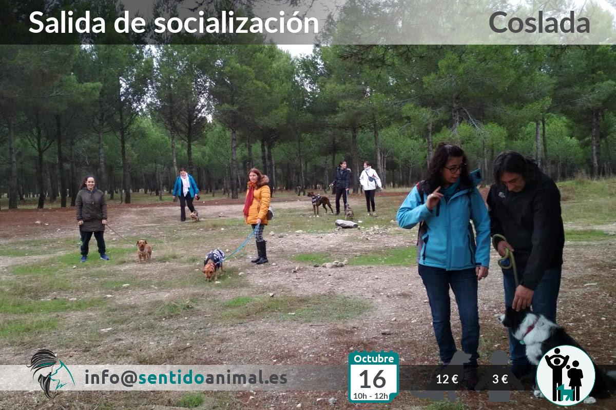 Socialización canina y paseo miércoles – octubre 2019