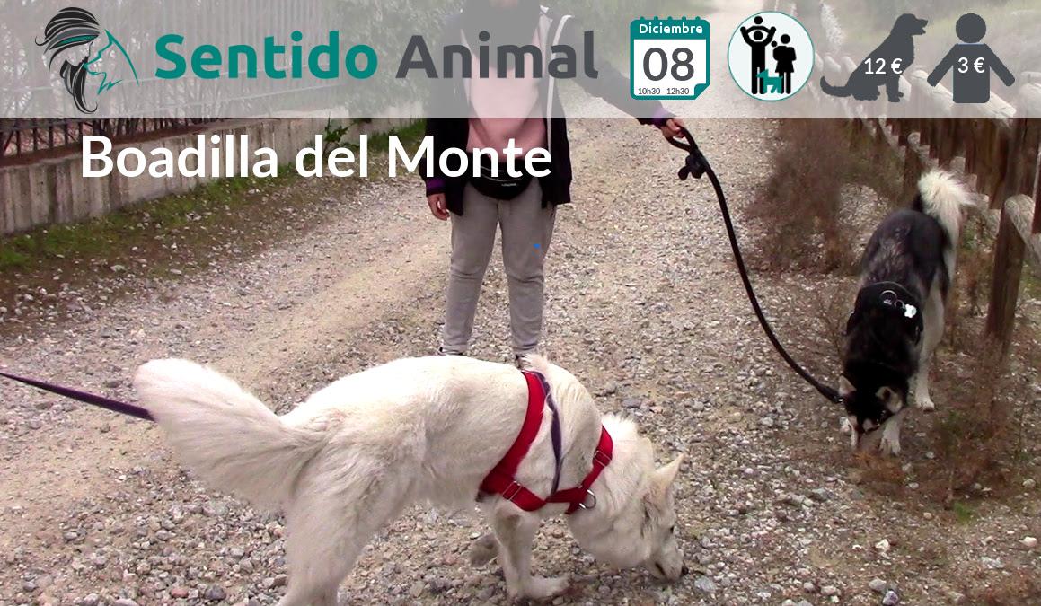 Socialización canina y paseo – diciembre 2019