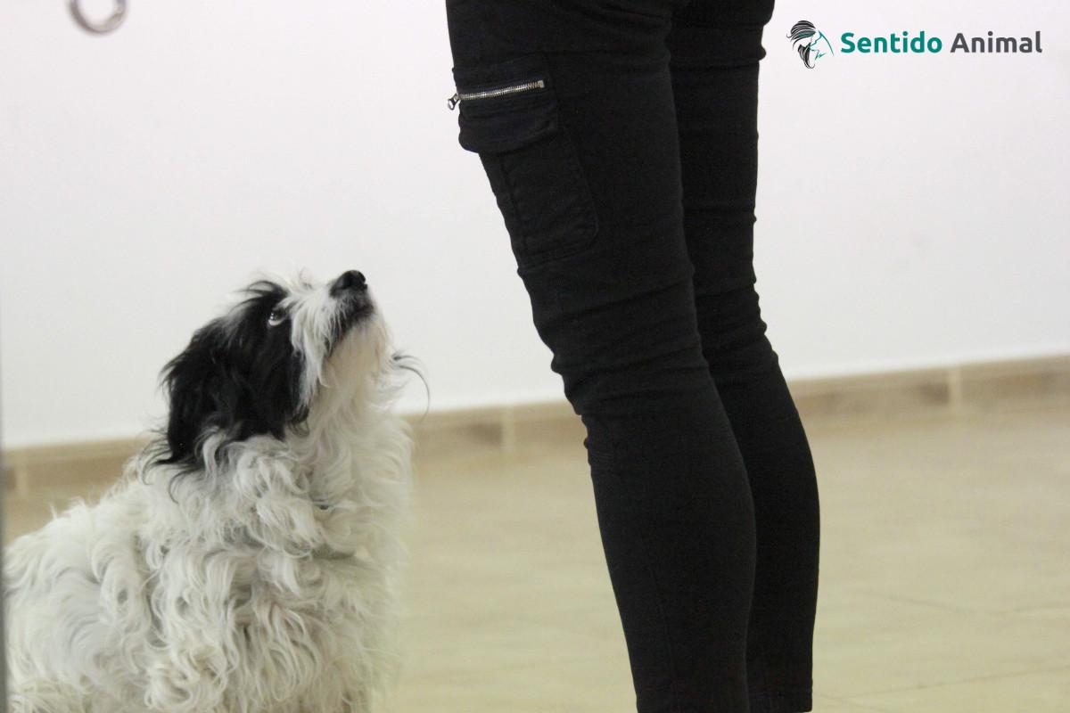 Cuando el perro es perro en sesión de terapia con animales