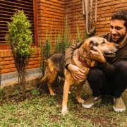 perro en un jardín