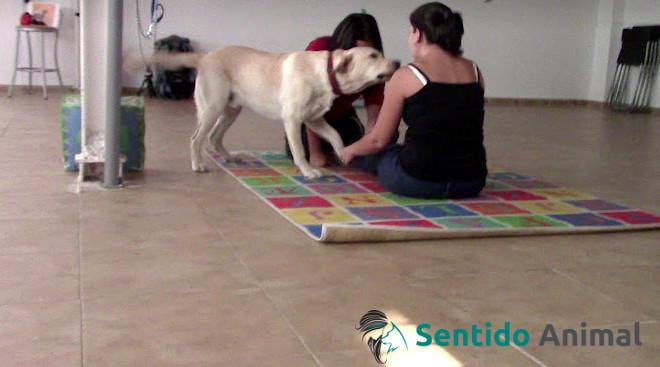 Sesión de Intervenciones Asistidas con Animales