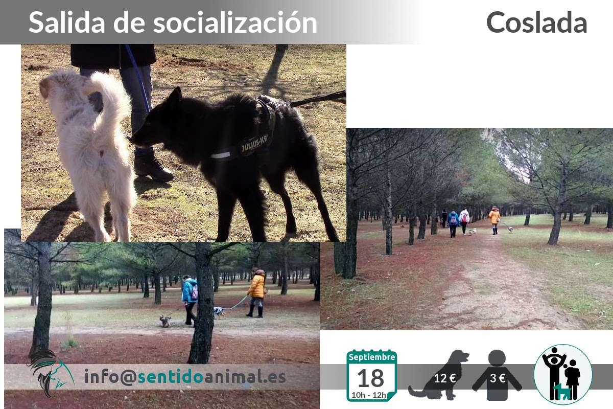 Socialización canina y paseo miércoles – septiembre 2019