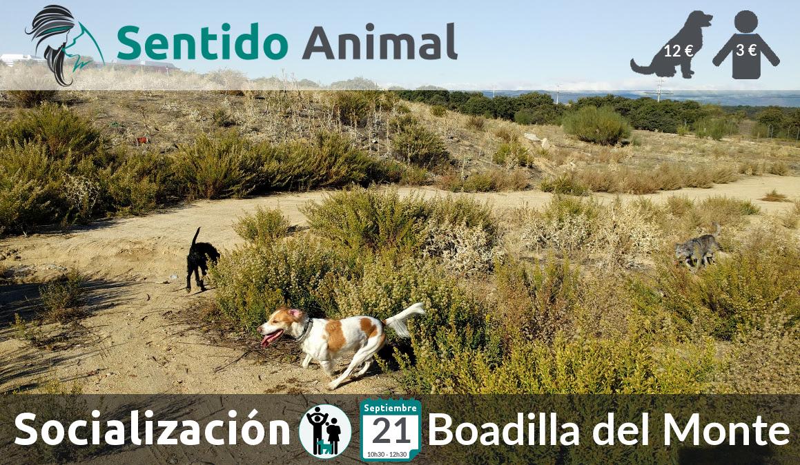 Socialización canina y paseo – septiembre 2019 (2)