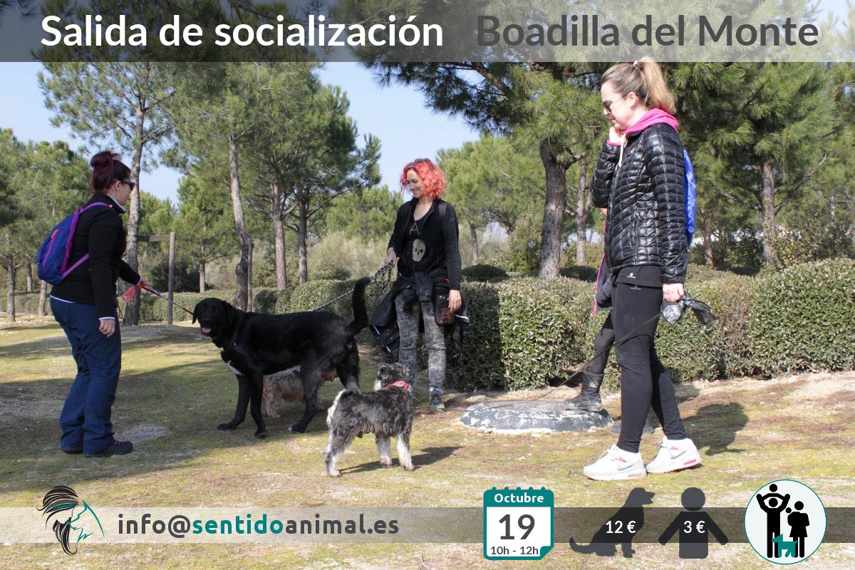 Socialización canina y paseo – octubre 2019 (2)
