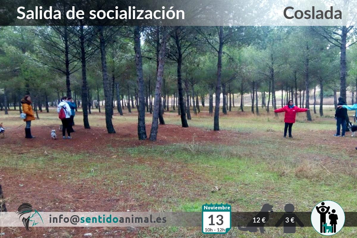Socialización canina y paseo miércoles – noviembre 2019