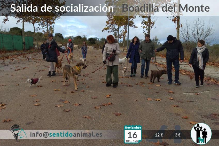 Salida de socialización canina - noviembre
