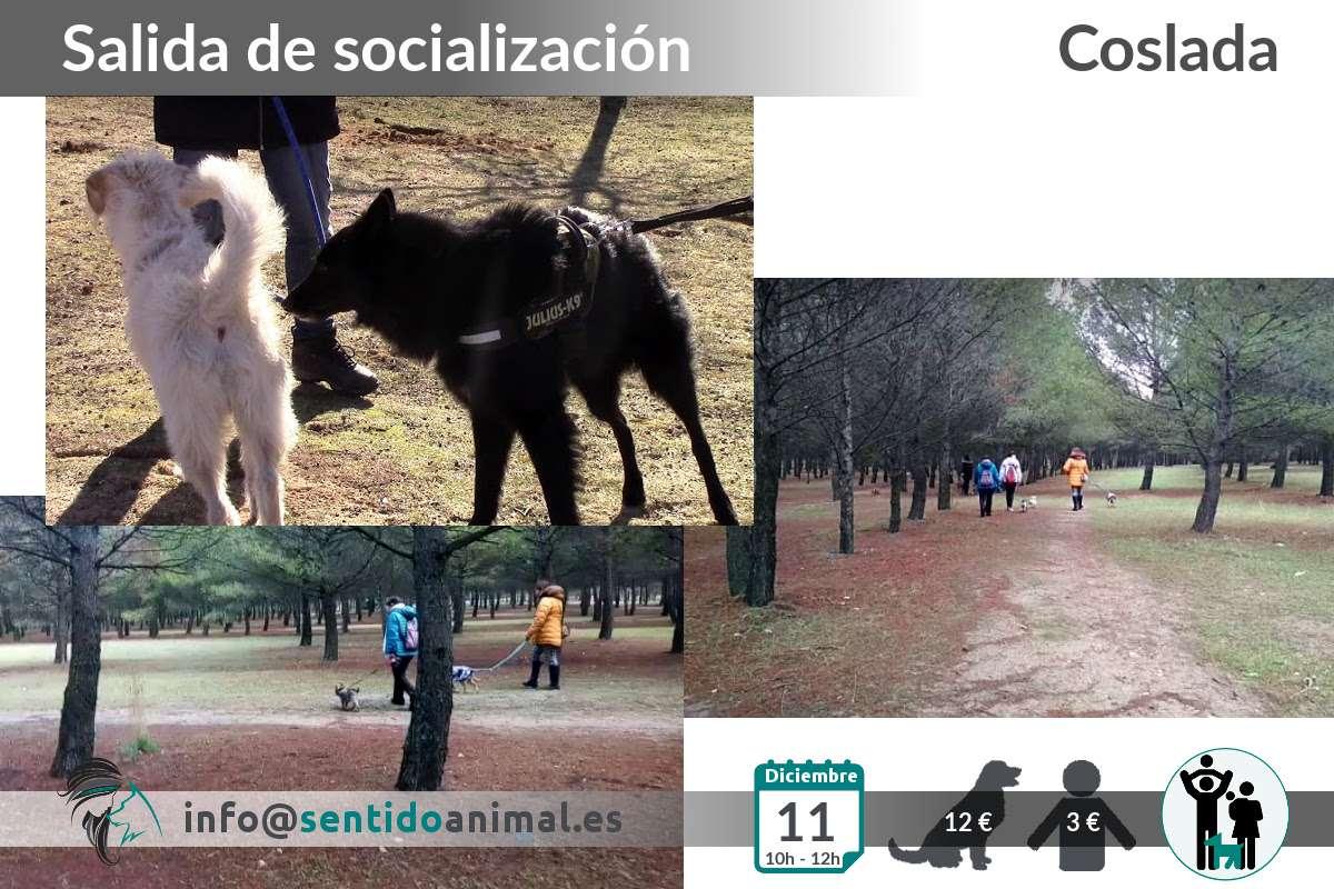 Socialización canina en Coslada