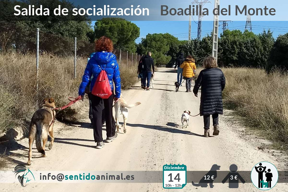 Socialización canina y paseo – diciembre 2019 (2)