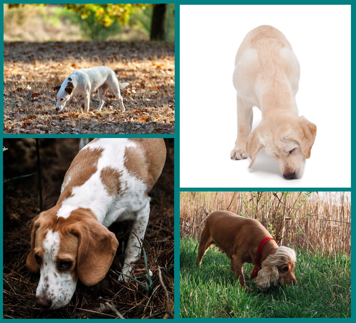 Olfateo en los perros - comunicación canina