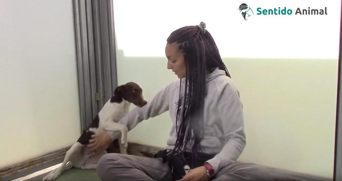 Timon, relajando a un cachorro - oct19