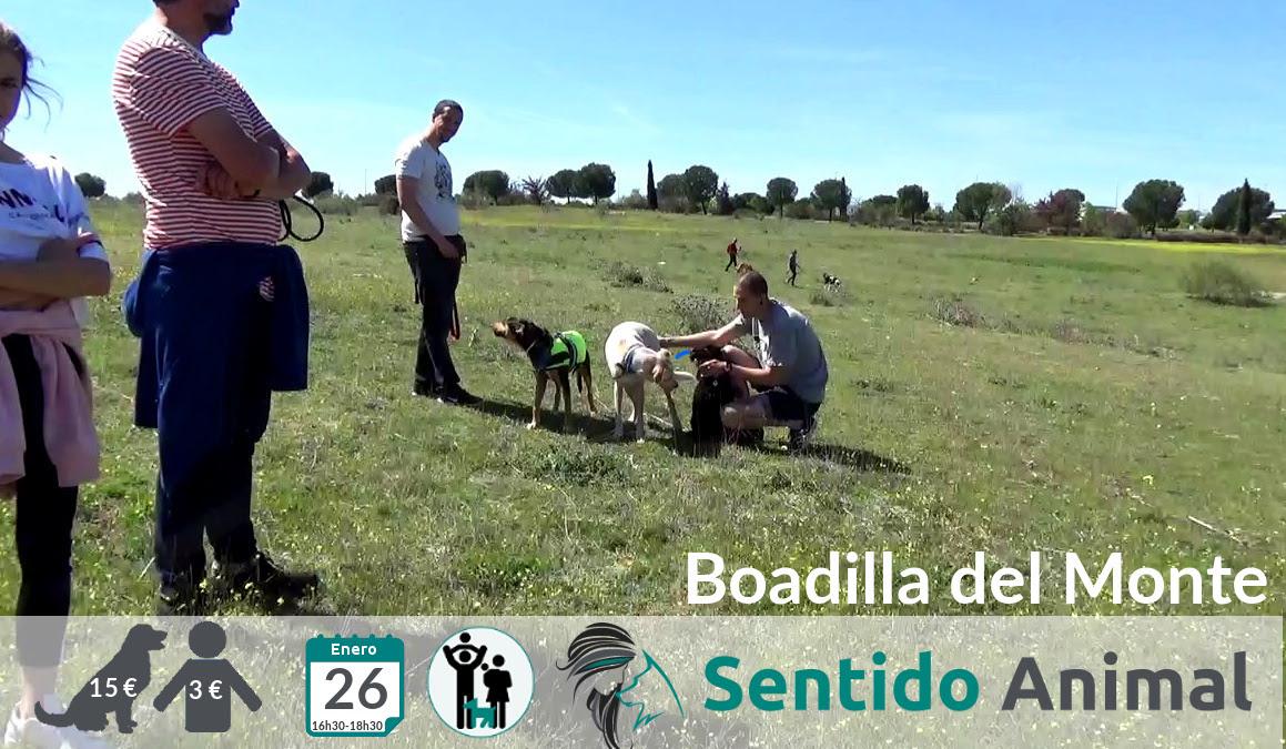 Socialización canina y paseo tarde – enero