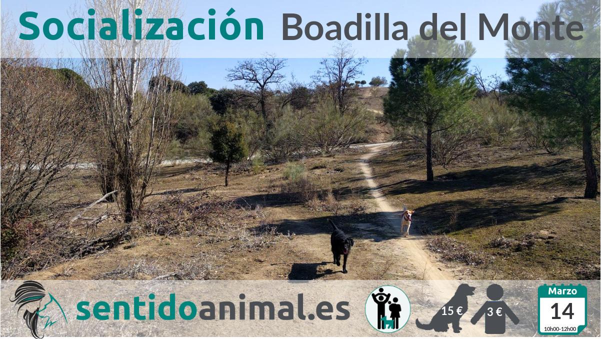 Socialización canina y paseo mañana – marzo 2020