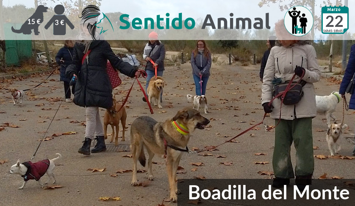 Socialización canina y paseo tarde – marzo 2020