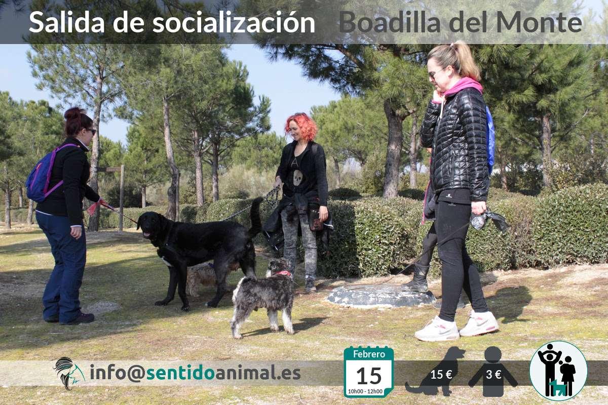 Socialización canina y paseo mañana – febrero 2020