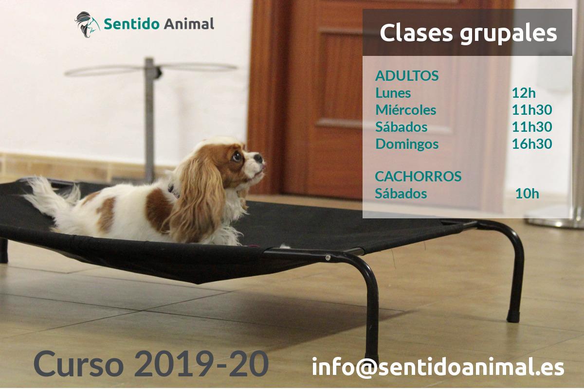 Clases grupales de educación canina