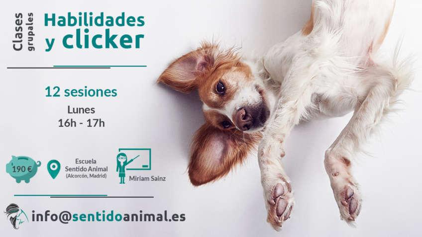 Habilidades y clicker_curso de educación canina