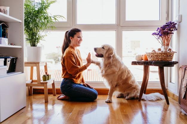 Golden Retriever con mujer en casa