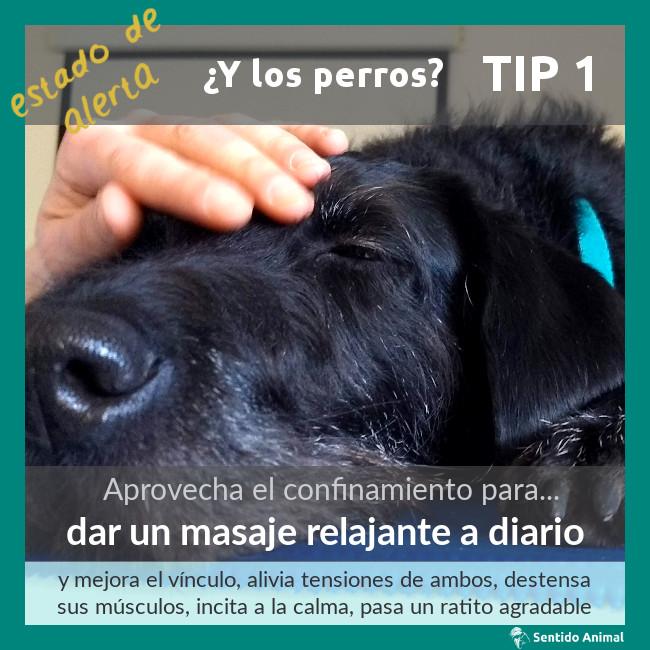 TIP 1 – estado de alerta – ¿y los perros?
