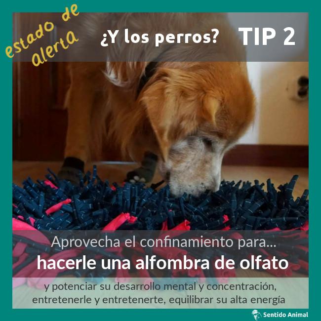 TIP 2 – estado de alerta – ¿y los perros?