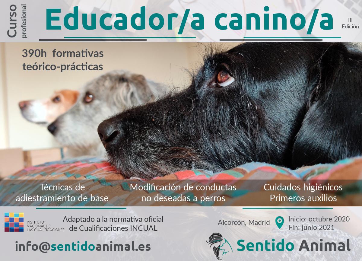 Curso profesional de Educador/a Canino/a (3ª edición)