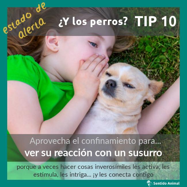 TIP 10 – estado de alerta – ¿y los perros?