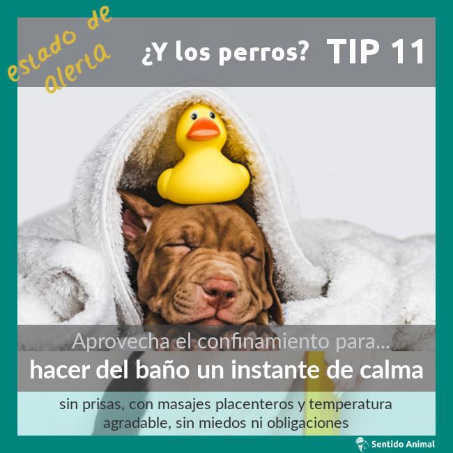 TIP 11 – estado de alerta – ¿y los perros?
