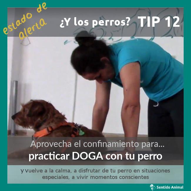 TIP 12 – estado de alerta – ¿y los perros?