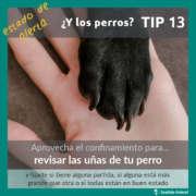 Pata de perro - estado de alerta por coronavirus