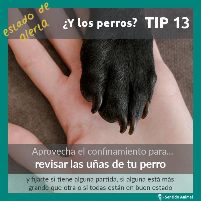 TIP 13 – estado de alerta – ¿y los perros?