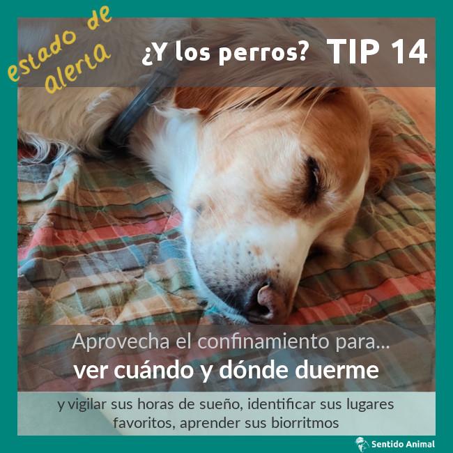 TIP 14 – estado de alerta – ¿y los perros?