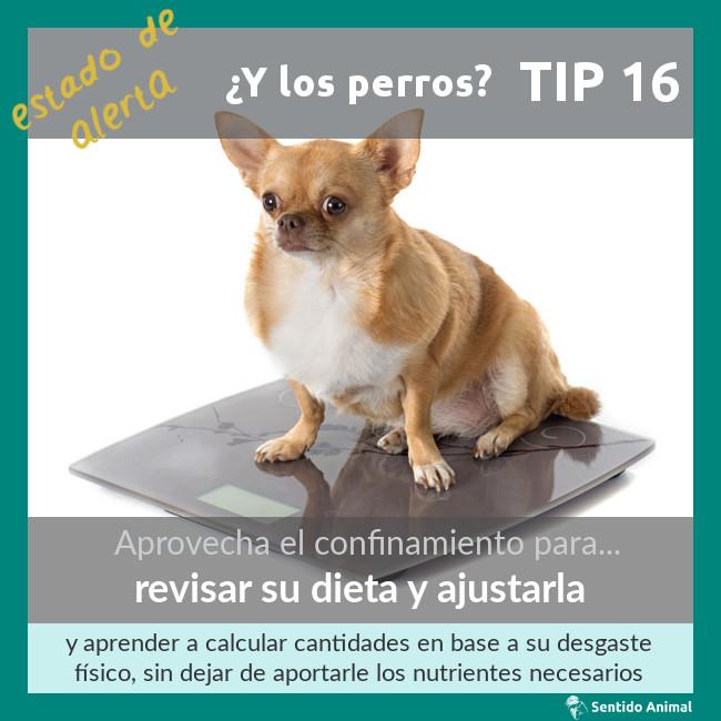 TIP 16 – estado de alerta – ¿y los perros?