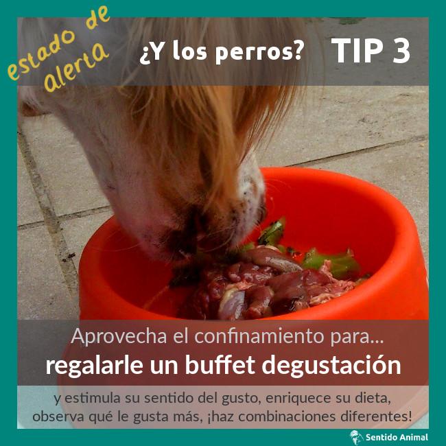 TIP 3 – estado de alerta – ¿y los perros?