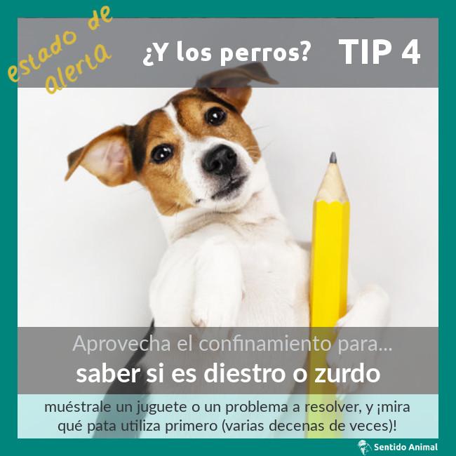 TIP 4 – estado de alerta – ¿y los perros?