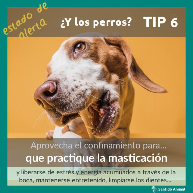 TIP 6 – estado de alerta – ¿y los perros?