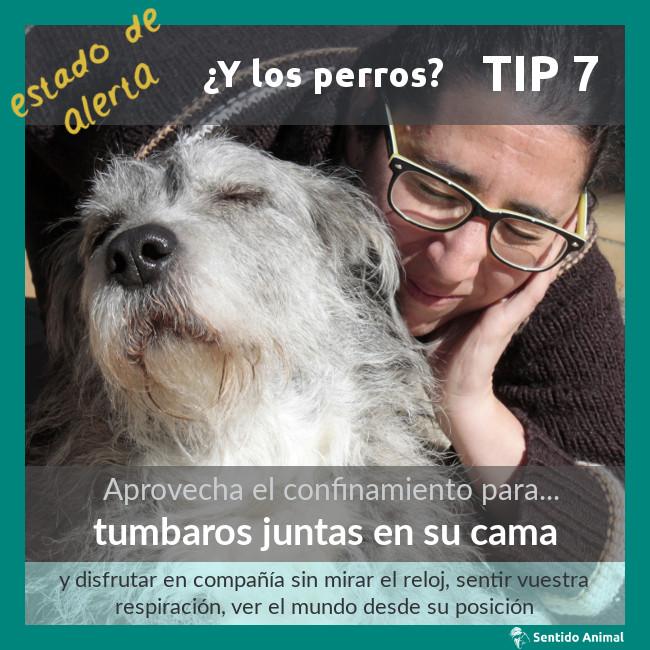 TIP 7 – estado de alerta – ¿y los perros?