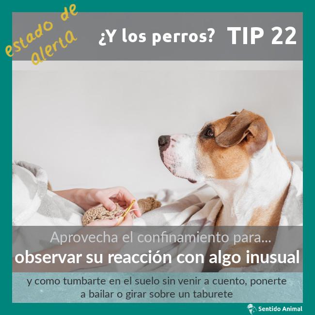 TIP 22 – observar su reacción con algo inusual – estado de alerta