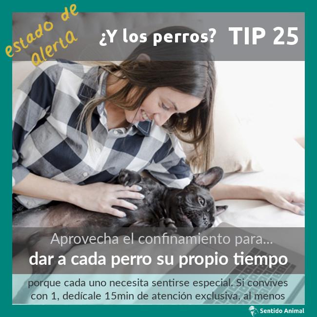 TIP 25 – dar a cada perro su propio tiempo – estado de alerta