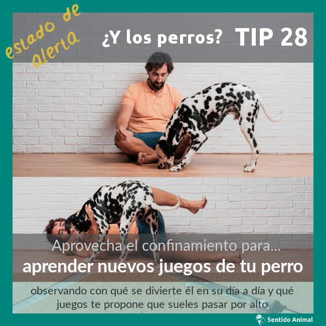 TIP 28 – aprender nuevos juegos de tu perro – estado de alerta