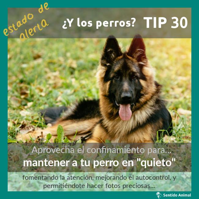 TIP 30 – mantener un perro en «quieto» – estado de alerta