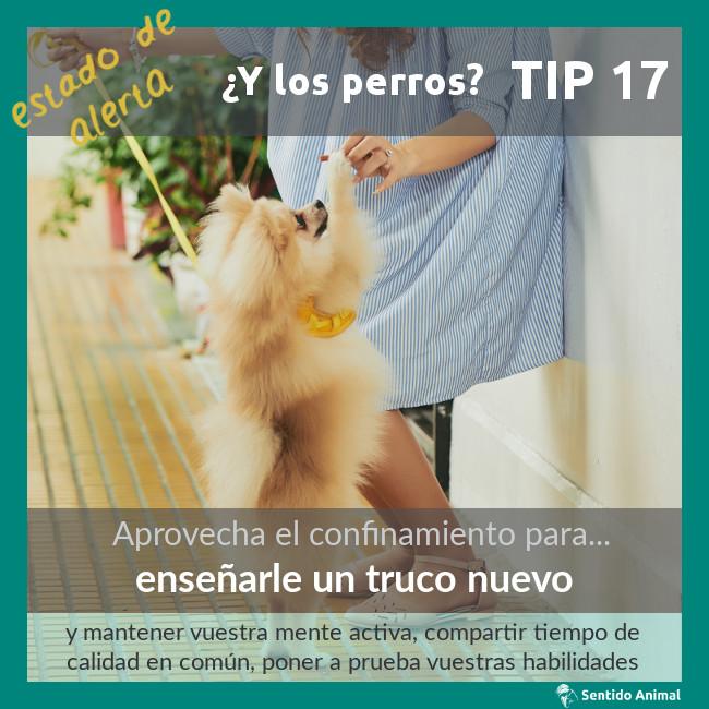 TIP 17 – Enseñarle un truco nuevo – estado de alerta