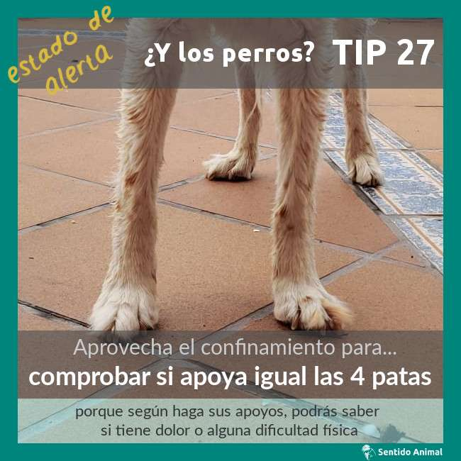 TIP 27 – comprobar si apoya igual las 4 patas – estado de alerta