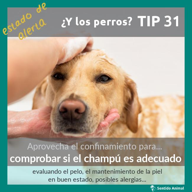 TIP 31 – comprobar si el champú es adecuado – estado de alerta